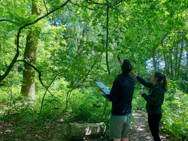 Tree identification on City of Trees course.