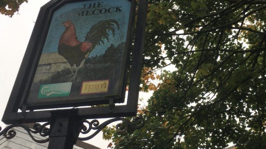 Gamecock pub sign in Hulme , in article about BBC documentary Manctopia