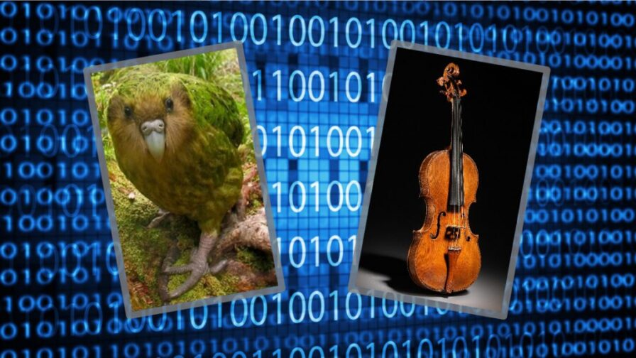 Image of kakapo and violin overlaid over binary numbers representing data