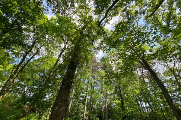 City of Trees: tackling climate change and promoting sanity